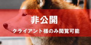 柴犬 インフルエンサー